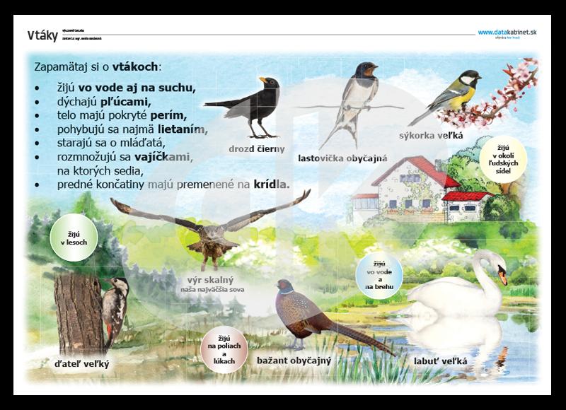 veľké blck vtáky